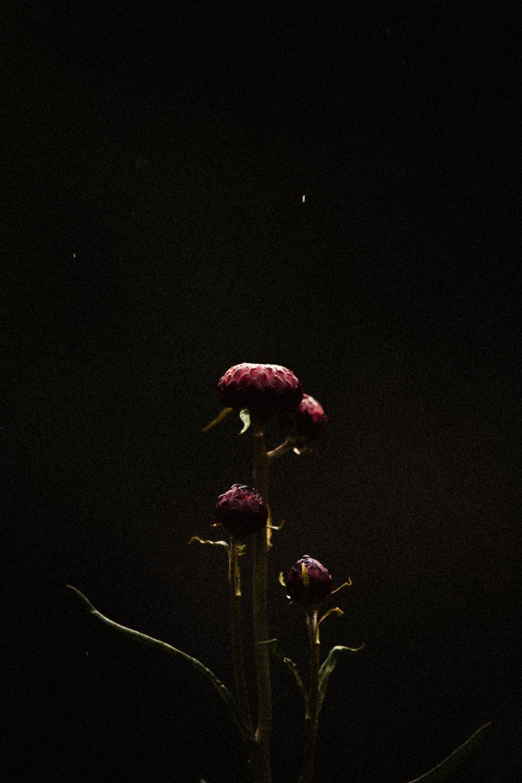FLOWERS | N RAMSEY (15 of 56).jpg