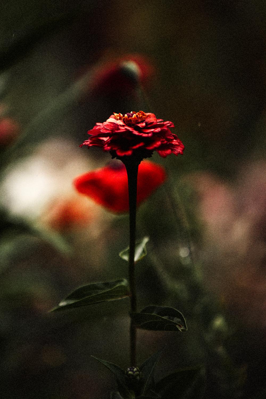 FLOWERS | N RAMSEY (16 of 56).jpg