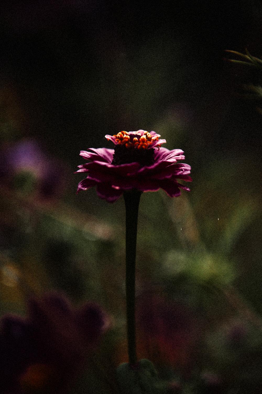 FLOWERS | N RAMSEY (18 of 56).jpg
