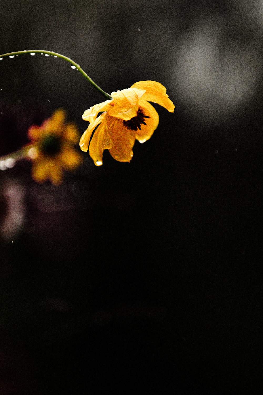 FLOWERS | N RAMSEY (23 of 56).jpg