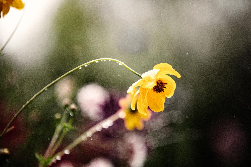 FLOWERS | N RAMSEY (22 of 56).jpg