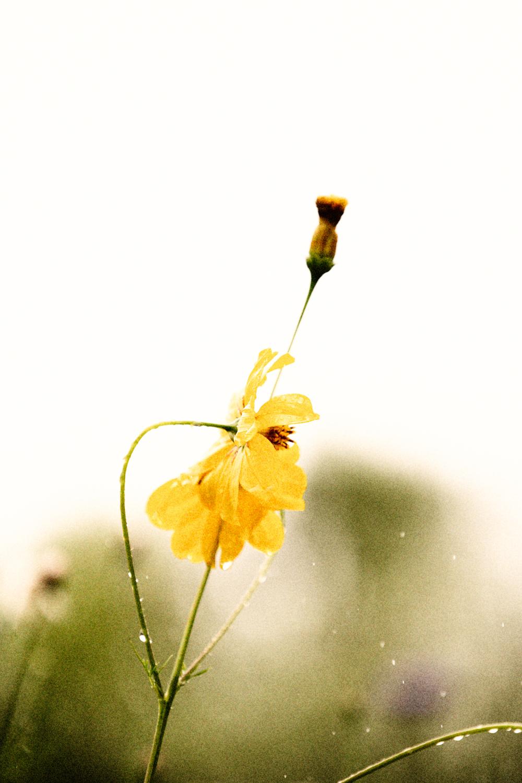 FLOWERS | N RAMSEY (24 of 56).jpg