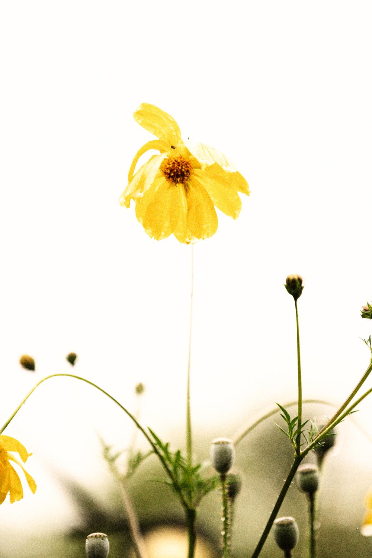 FLOWERS | N RAMSEY (25 of 56).jpg