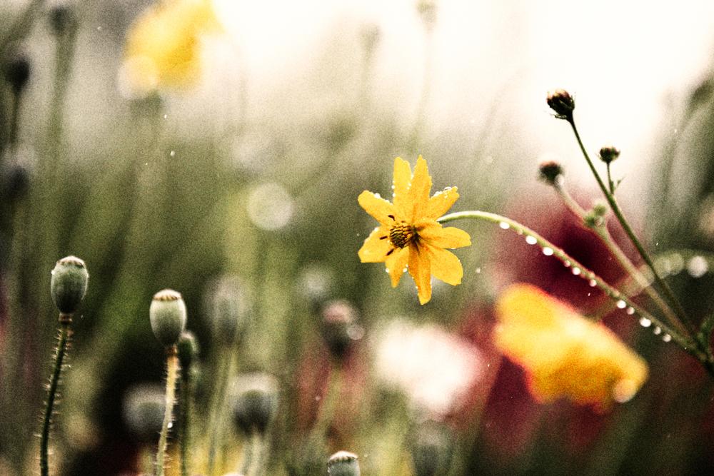 FLOWERS | N RAMSEY (27 of 56).jpg