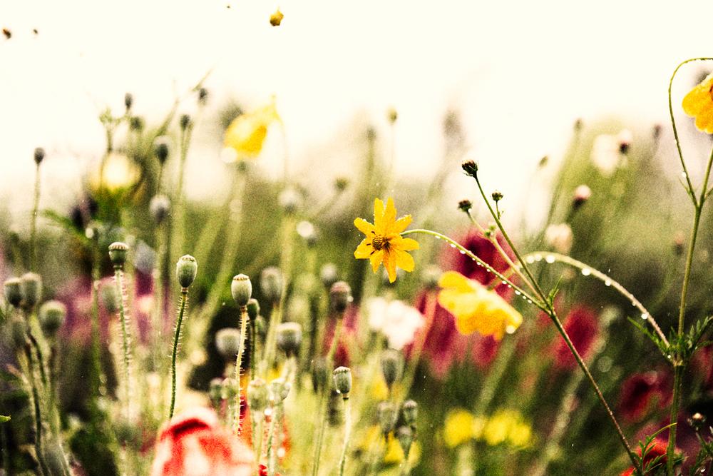 FLOWERS | N RAMSEY (26 of 56).jpg