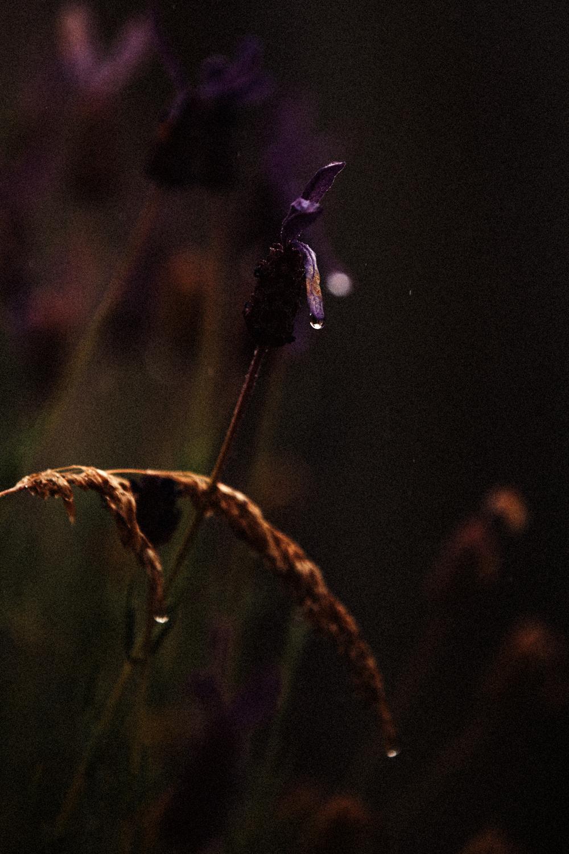 FLOWERS | N RAMSEY (29 of 56).jpg