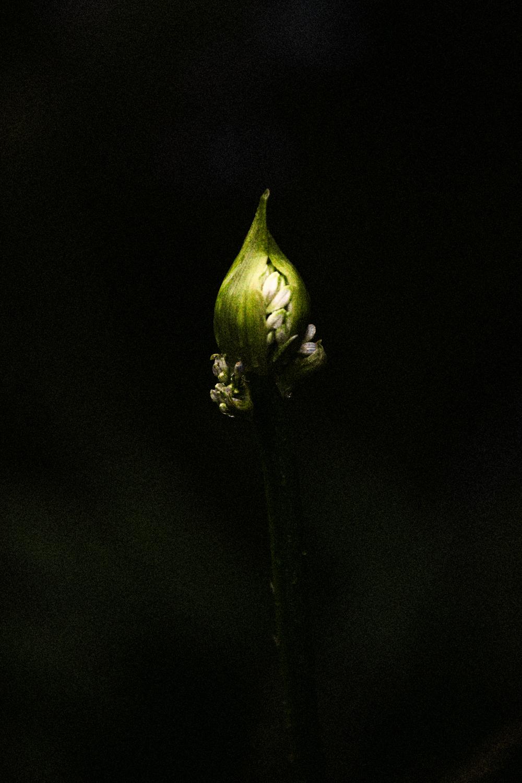 FLOWERS | N RAMSEY (32 of 56).jpg