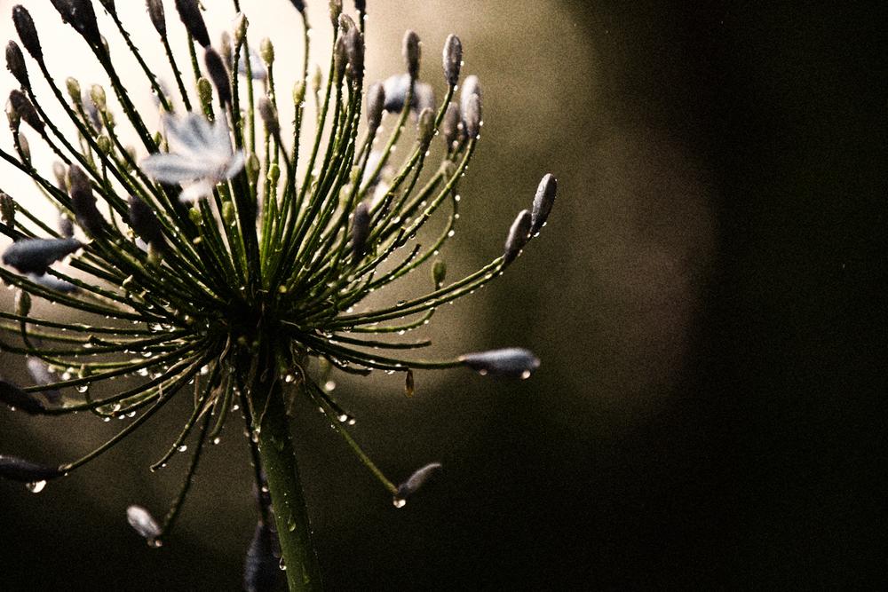 FLOWERS | N RAMSEY (33 of 56).jpg