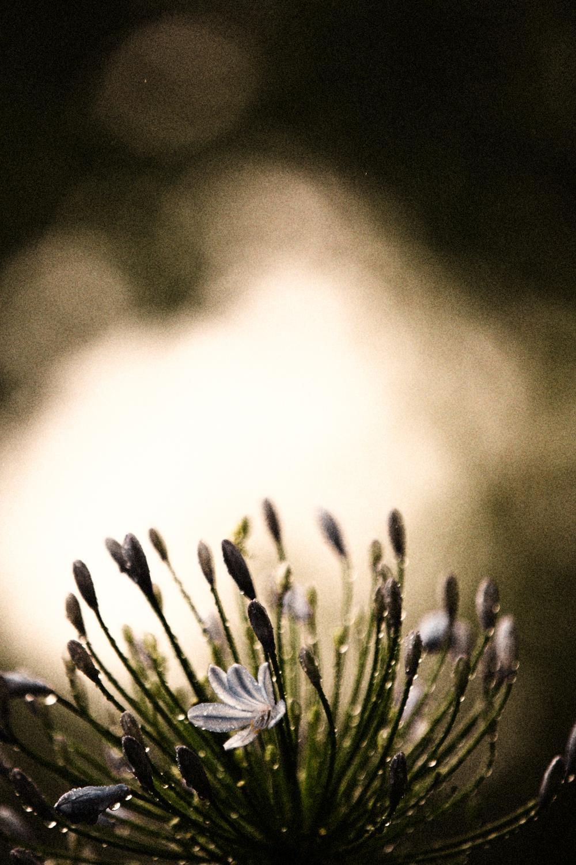 FLOWERS | N RAMSEY (34 of 56).jpg