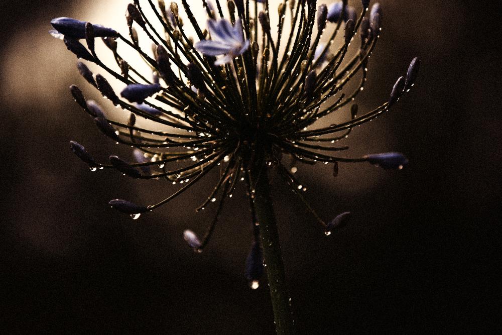 FLOWERS | N RAMSEY (35 of 56).jpg