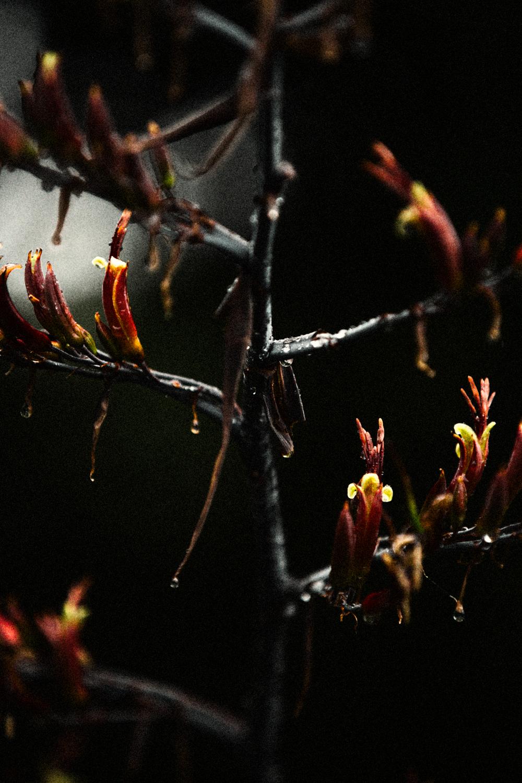 FLOWERS | N RAMSEY (47 of 56).jpg