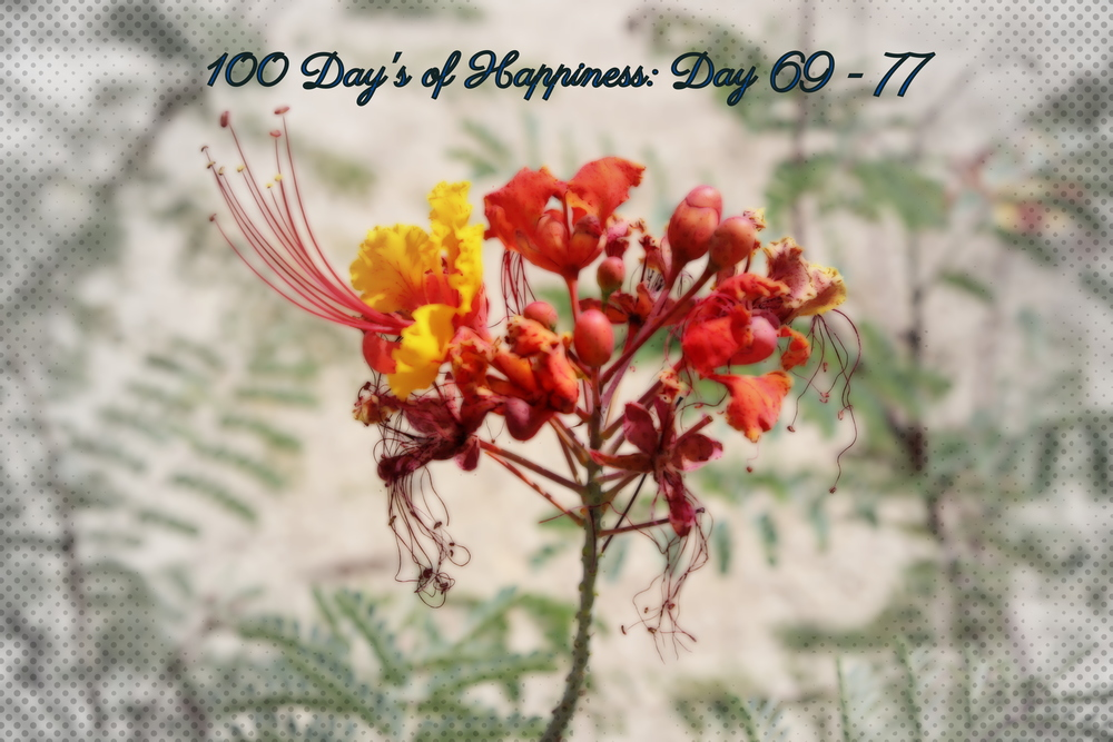 100 Days of Happiness: Day 69-77