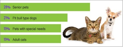 Stats showing which pets have a harder time finding a forever home.