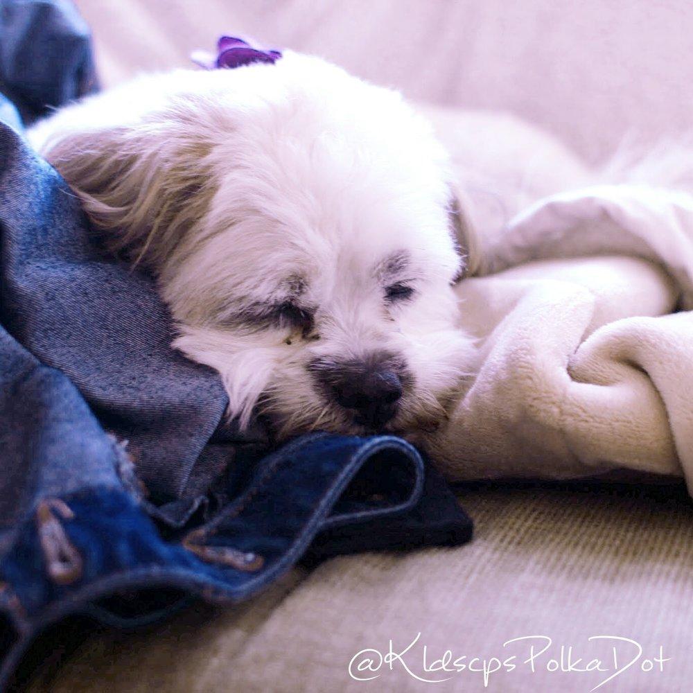 Penny Gibson #sleepypuppy #puppylife #sleepyface