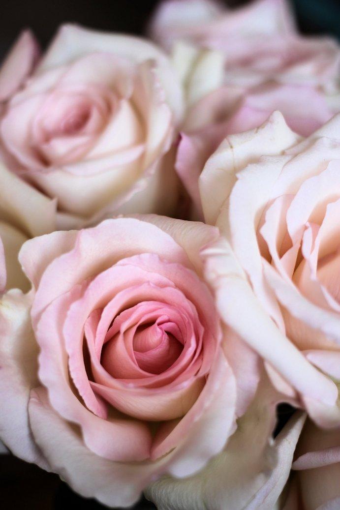 Three Nontraditional Valentine's Day Ideas #giftgiving #romanticatheart #diy #lbloggers #cbloggers #bookbloggers