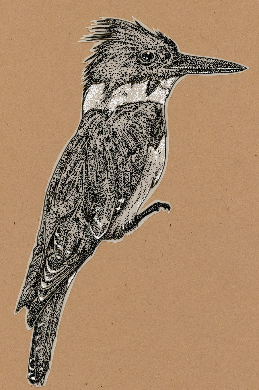 Kingfisher.  Pen illustration on frosted Mylar. ~5''x 3''. Part of a layered work using translucent patterning. Shown here on brown kraft paper. March 2014.