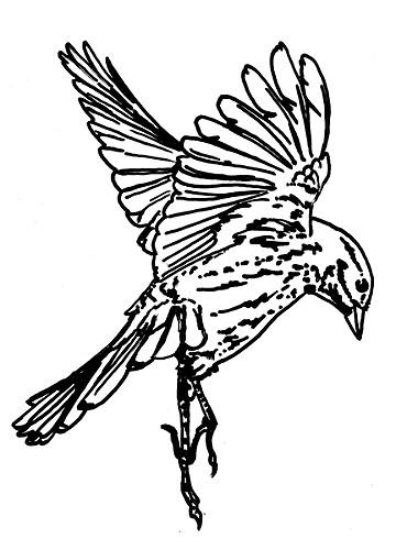 sparrow1.jpg