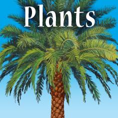 SC_Catgry_Plants.jpg