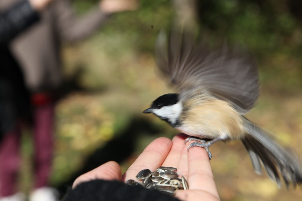 birds with ebe 3.JPG