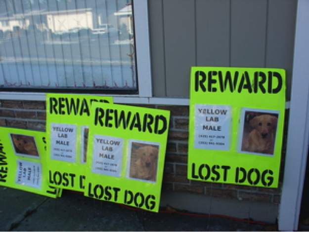 Finding lost dogs tips for on creating lost dog posters