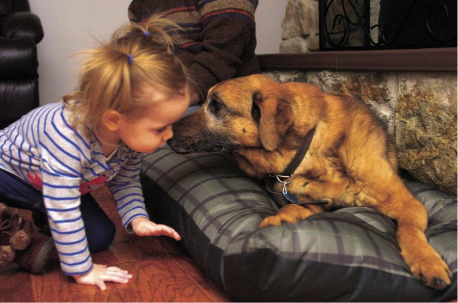 Kola and his newest best bud, Ellianna Henry, share a little pooch smooch.