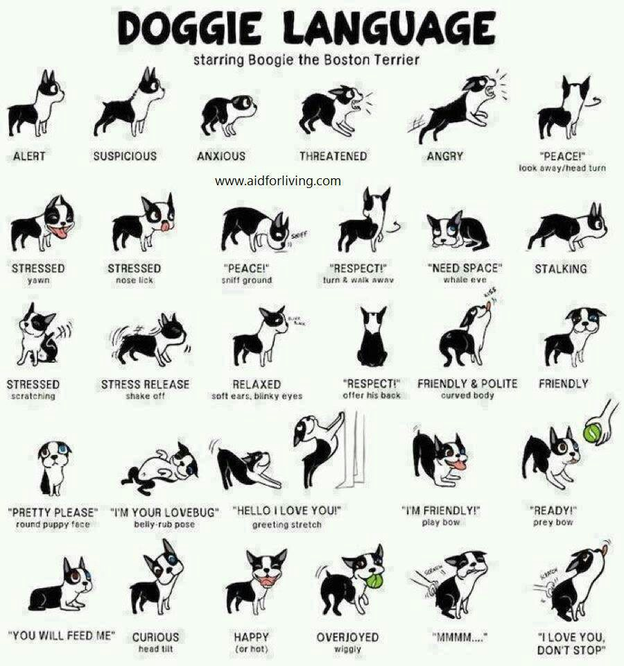 Doggy-Body-Language.jpg