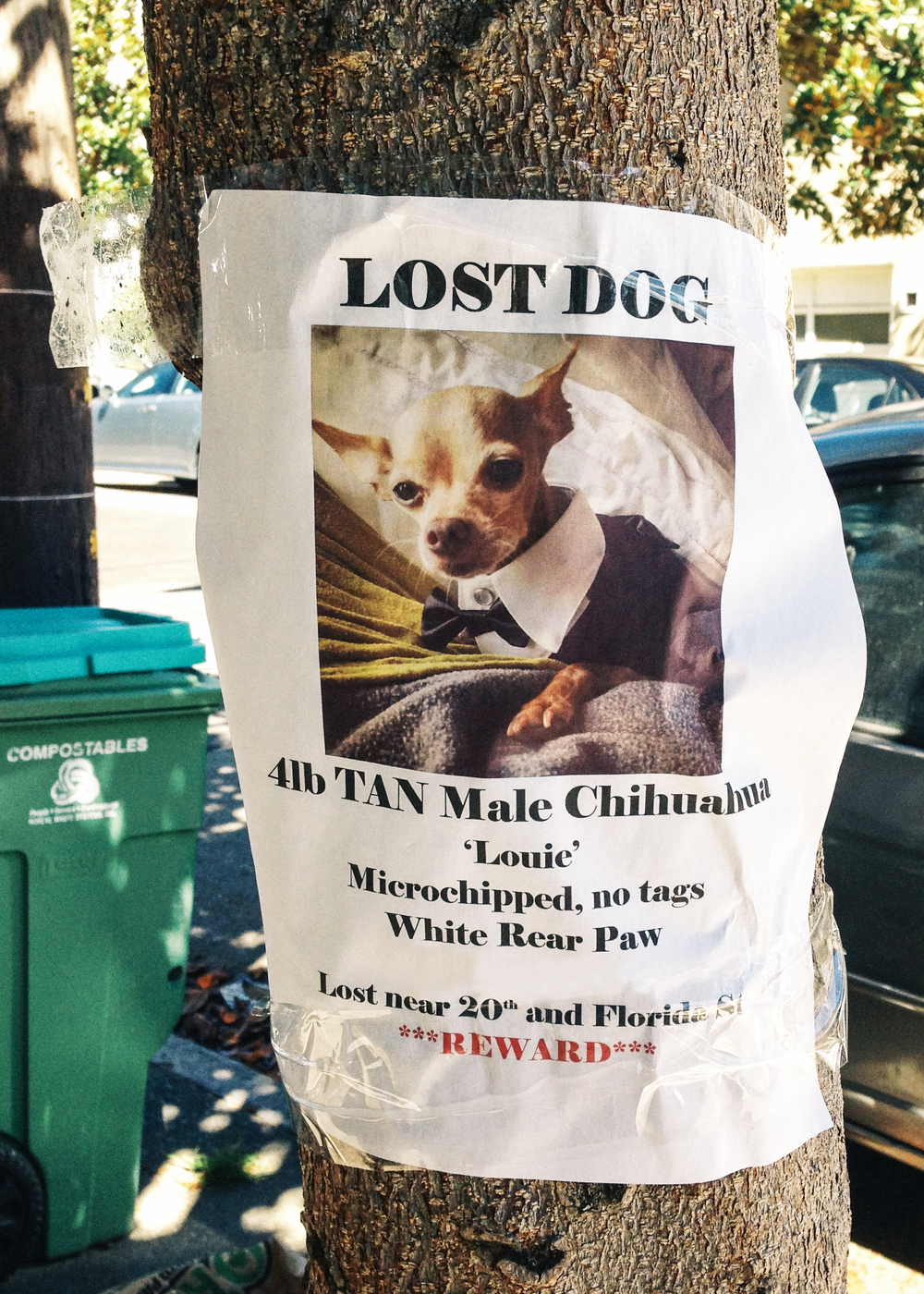 lost dog To start over, click reset flyer to clear the entries from the form learn how to get  the most out of your flyers by visiting our tips for posting lost and found pet.