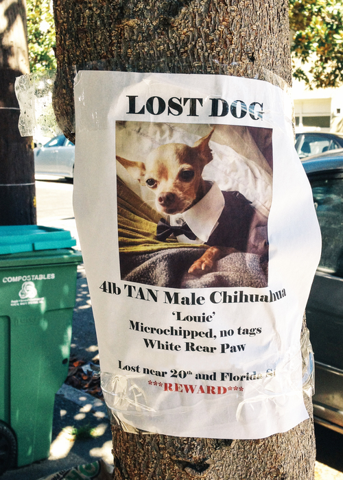 Finding Lost Dogs: Where to Put Lost Dog Posters | Finding Rover