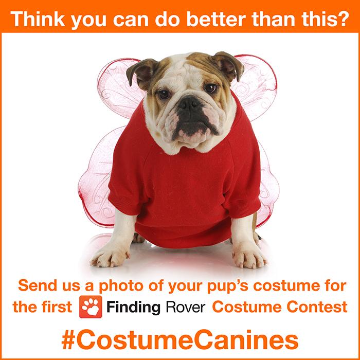 Costume_Canine.jpg