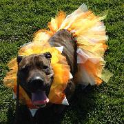 Tammy Homan - Bessie Lou as candy corn