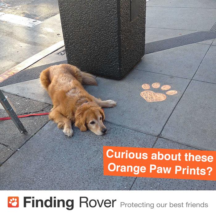 Finding-Rover-Orange-Paw-Prints.jpg