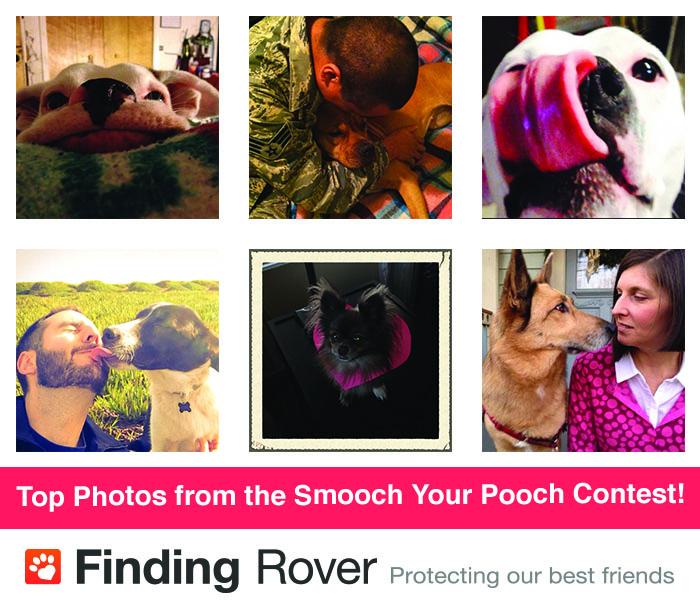 Smooch-You-Pooch-Top-Photos.jpg
