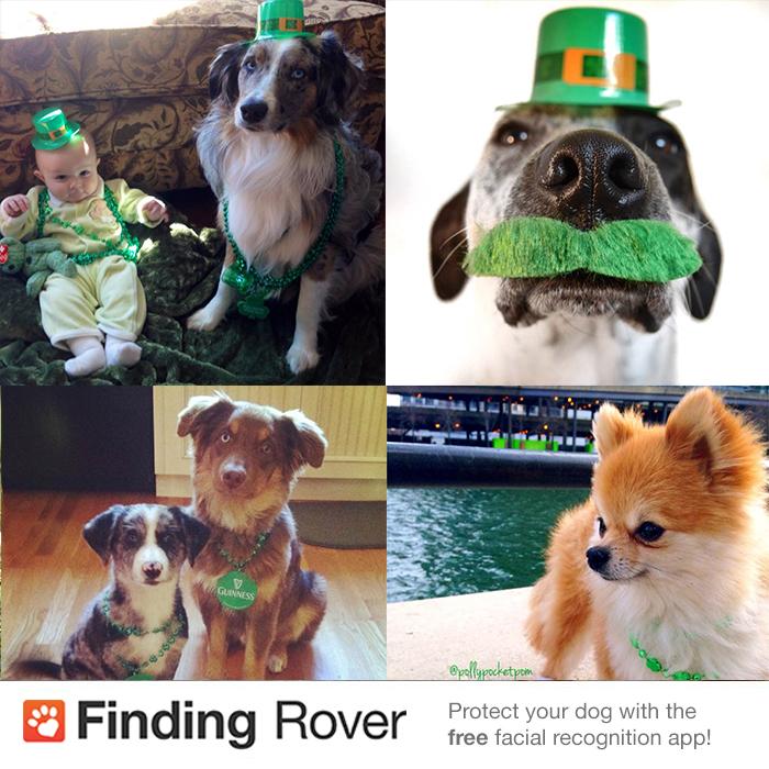 winners-shamrock-dog.jpg