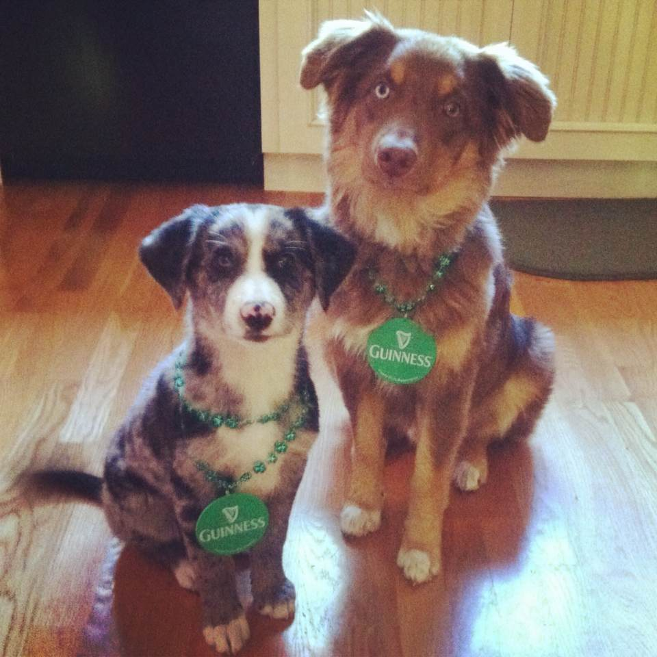 Olivia's two pups representing their Irish pride.