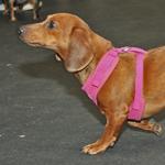 Photo: Pets Adviser