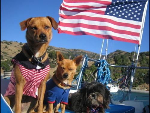 4thofJuly-2-Vickie_Yoon_s_dogs.jpg