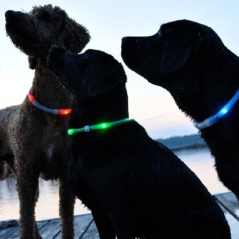 Glow-sticks for identification and seeing during a power outage. (Not to replace a collar) Found at local dollar store.
