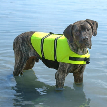 Life jacket for flood safety.Found at local pet supply store.