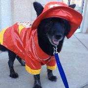 Kimberly's Bubba the Hero Firefighter