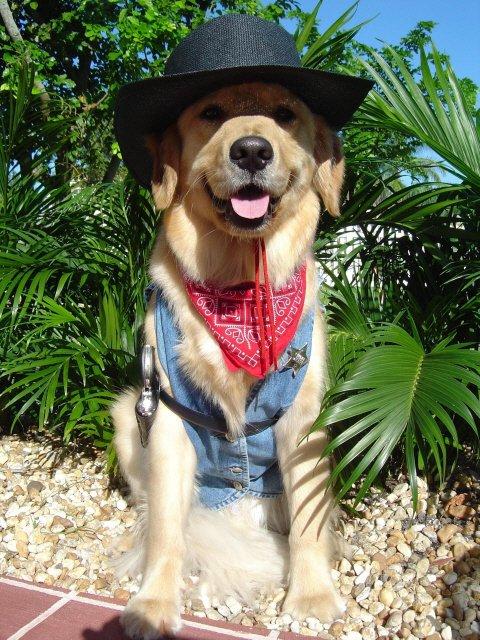 Cowboy LAb.jpg