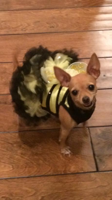 Aimee M's Bumble Bee