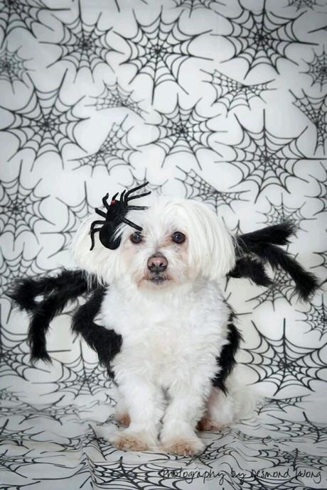 Desmond W's Spider