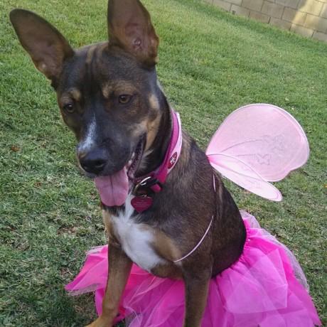Elizabeth B's Butterfly