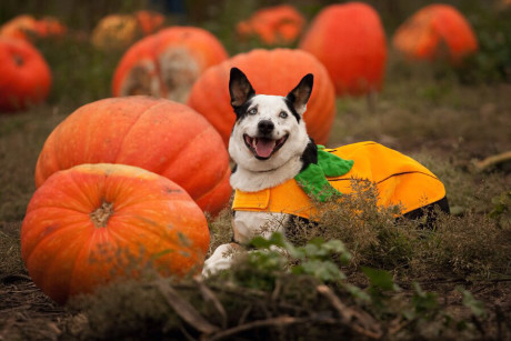 Heidi H's Pumpkin