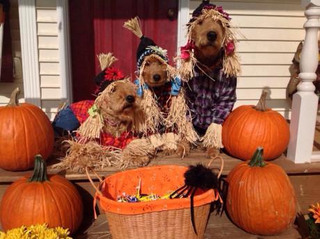 Linda W's Scarecrow Trio
