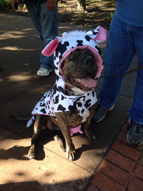 Tammy H's Cow