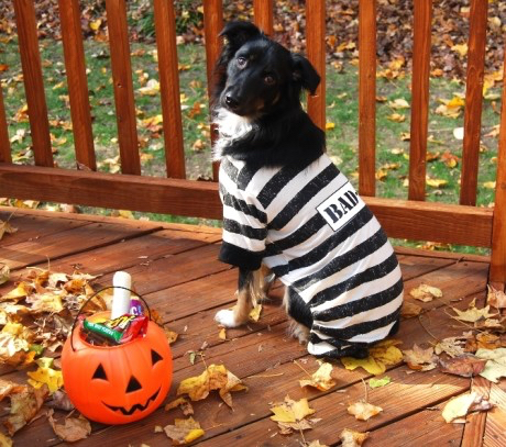 Tracy B's Jail Breaker