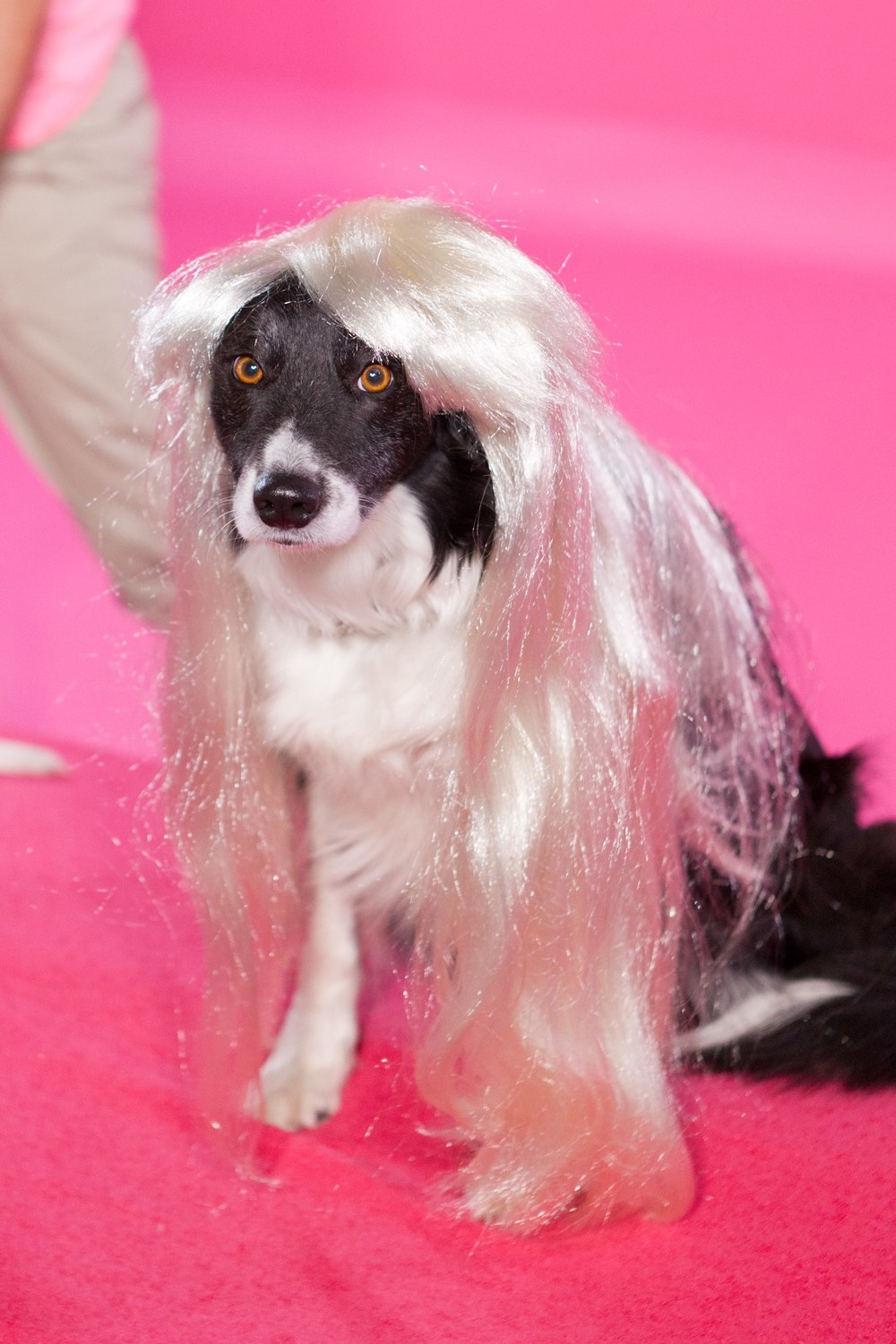 Wig pup via Neil Lockhart.jpg