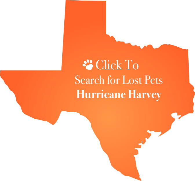 hurricane-harvey.png