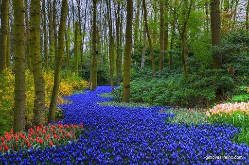 Tulip Fields - Keukenhof Gardens, Amsterdam